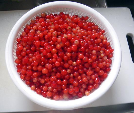 フサスグリの収穫♪_a0136293_1957537.jpg