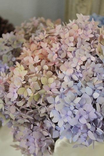 秋色紫陽花。。_c0178104_08311974.jpg
