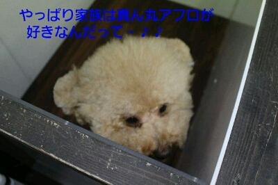 b0130018_003273.jpg