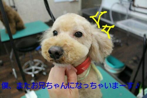 b0130018_031324.jpg