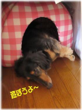 きゅうりのQちゃん パート2_c0058727_105241.jpg