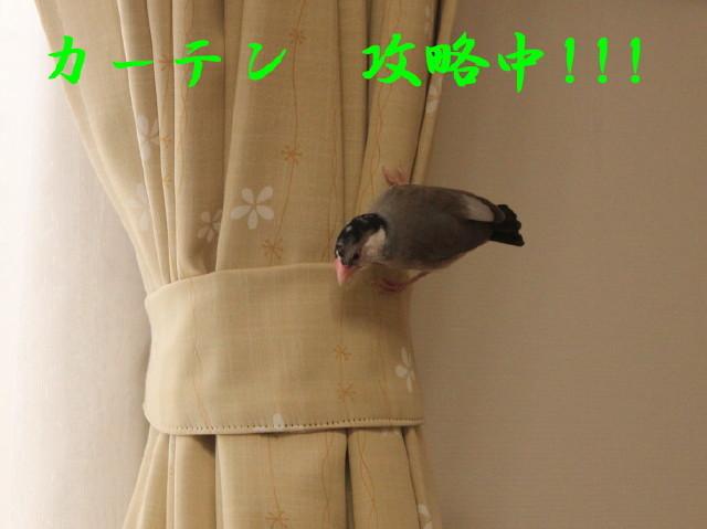 c0365734_21193832.jpg