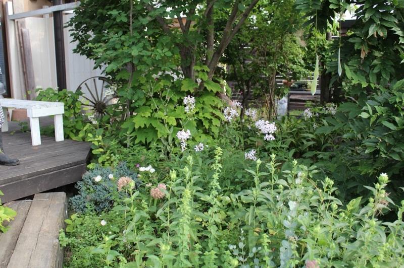 今朝の庭_b0132338_07315464.jpg