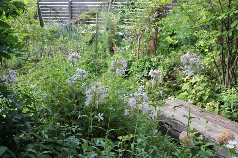 今朝の庭_b0132338_07320591.jpg