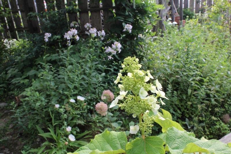 今朝の庭_b0132338_07321098.jpg