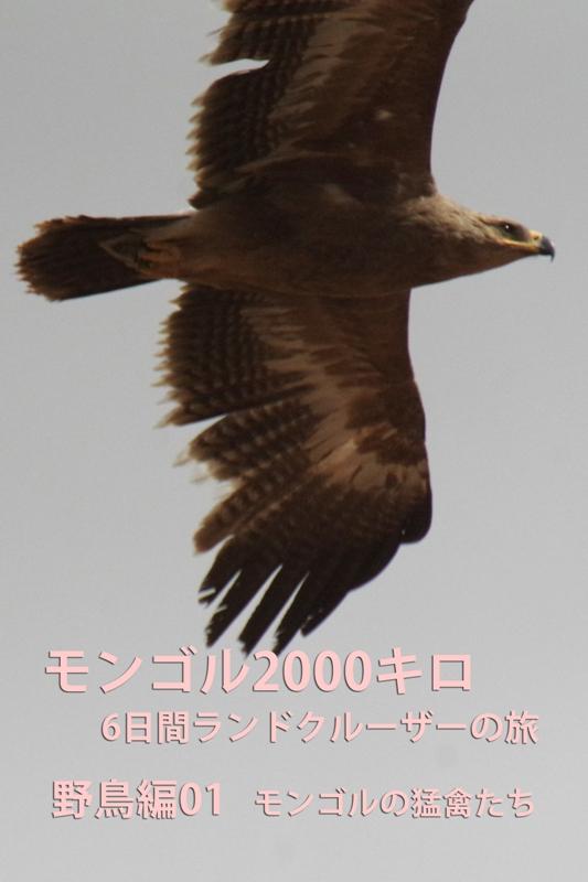 b0144049_16505491.jpg