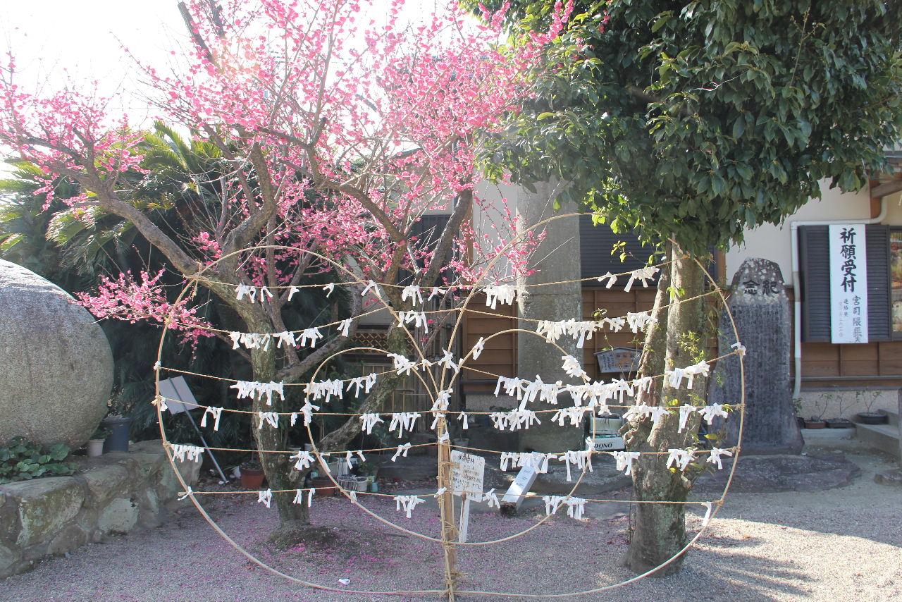 【大善寺玉垂神社】 日本三大火祭りの「玉垂宮の鬼夜」で有名_c0011649_2541335.jpg