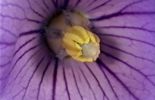 本日の配信映画は「花と受粉/キッチンの衛生―食中毒の予防―」_b0115553_10323880.png