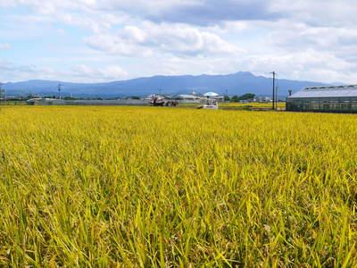 砂田米 田植え取材2015 今年もれんげと稲ワラだけで育てるばい!!その2(種まき~田植え)_a0254656_19254961.jpg