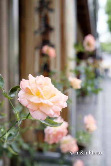 街角に咲く_e0321360_23283572.jpg