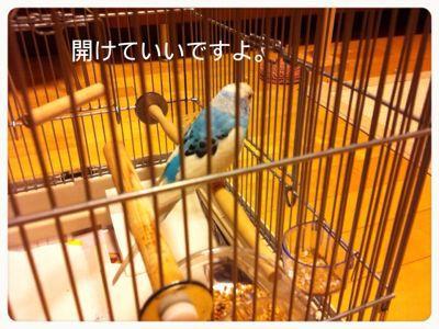 c0135363_1394586.jpg
