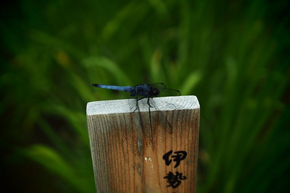 花菖蒲 2015   <山田池公園>                     _f0021869_23335218.jpg