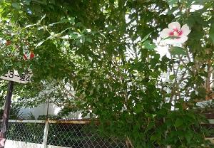 二十五日 その二  酒鬼薔薇聖斗とはだれですか。_c0243877_13525752.jpg