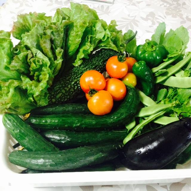 夏野菜収穫_f0204295_1933322.jpg
