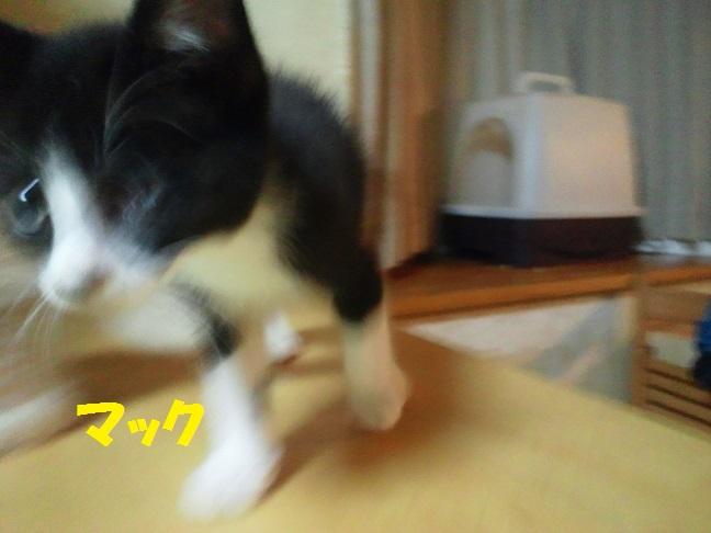 あっきぃへ 現場の子へ 猫たちへ_f0242002_102706.jpg