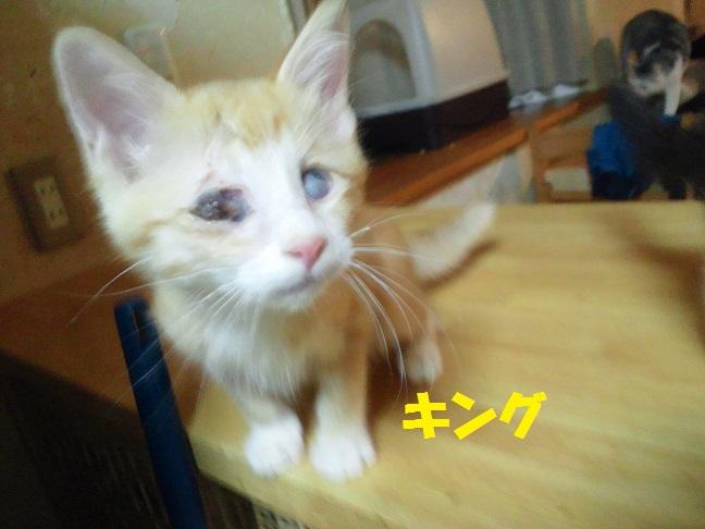 あっきぃへ 現場の子へ 猫たちへ_f0242002_10272234.jpg