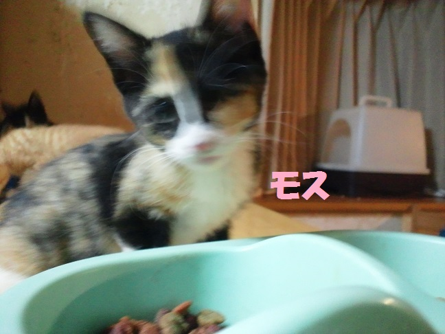 あっきぃへ 現場の子へ 猫たちへ_f0242002_1027927.jpg