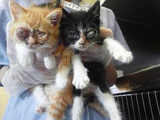 あっきぃへ 現場の子へ 猫たちへ_f0242002_10292160.jpg