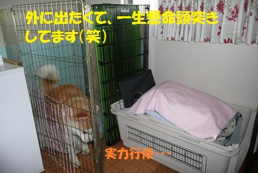 f0121712_22575194.jpg