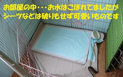 f0121712_2258556.jpg