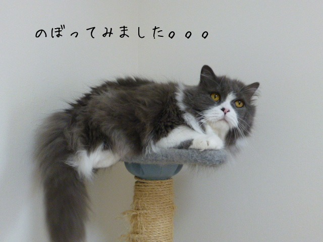 キャットタワー復活_e0237625_1873480.jpg