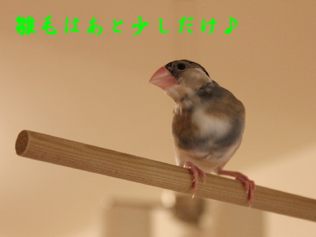 c0365734_20251766.jpg