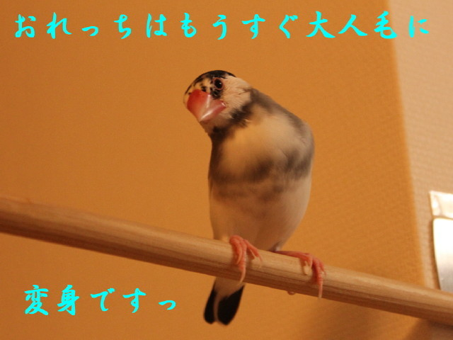 c0365734_20252015.jpg