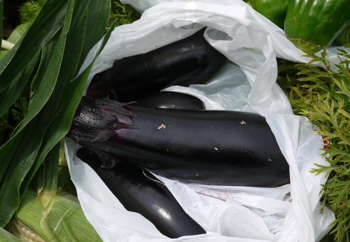 トウモロコシ、モロヘイヤ、オクラ初収穫6・22_c0014967_19284228.jpg