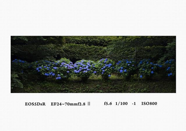 a0236775_2031251.jpg