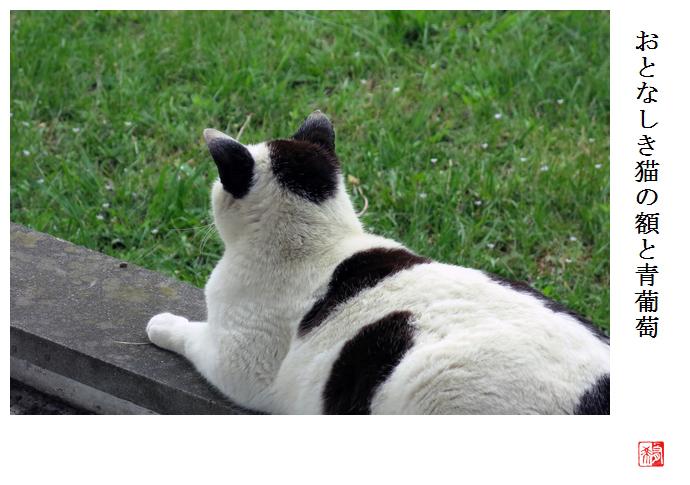 猫_a0248481_2146152.jpg