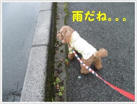 さくら、栞鳳に大接近??_b0175688_21333660.jpg