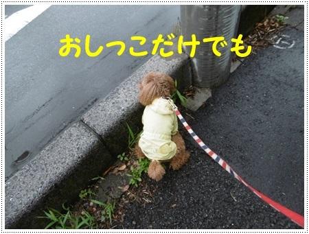 さくら、栞鳳に大接近??_b0175688_21334205.jpg