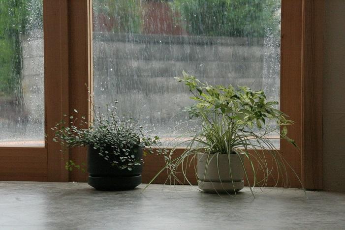 『植栽』_c0211307_1733539.jpg