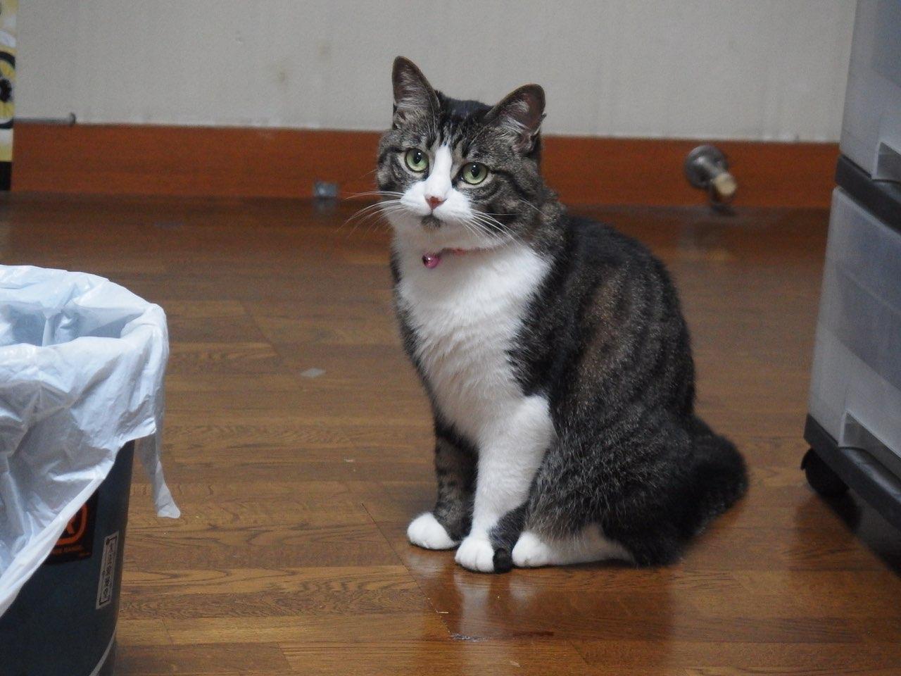【猫】振り向けば_f0141609_118499.jpg