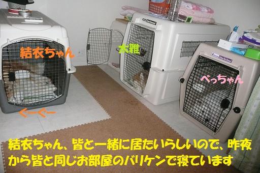 f0121712_0375099.jpg
