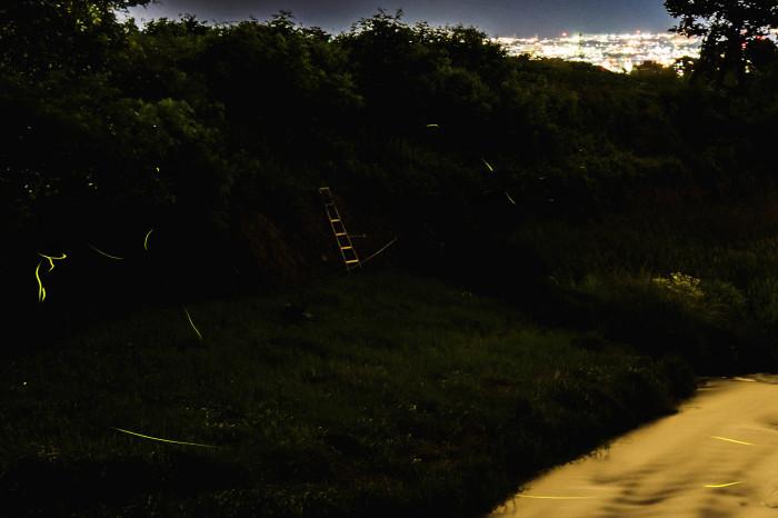 Night Sight Ⅳ_d0265224_22294220.jpg