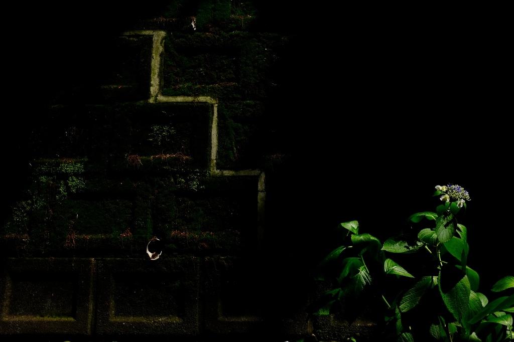 Shadow6_f0050534_00110061.jpg