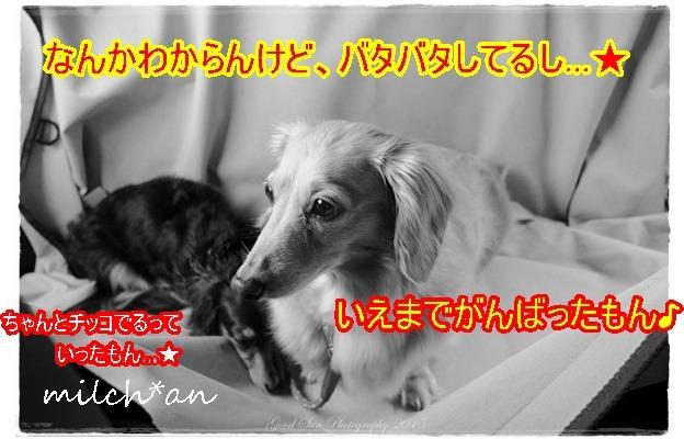 b0115642_2141619.jpg
