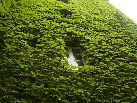 緑みどり ( Tout vert ) …… 。_b0287748_1658917.jpg