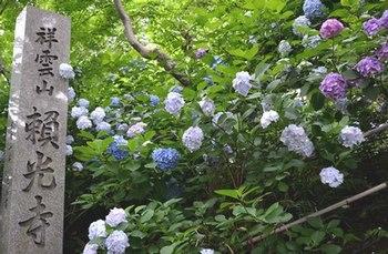 地元の紫陽花寺へ詣る_b0102572_1634875.jpg