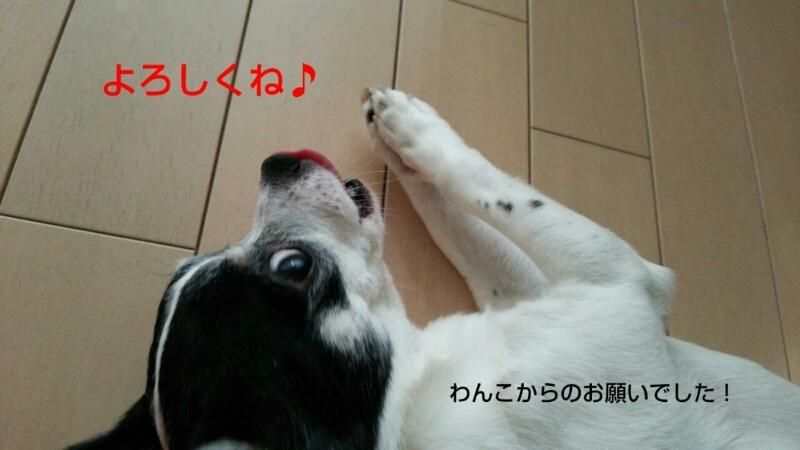 c0109891_1333867.jpg