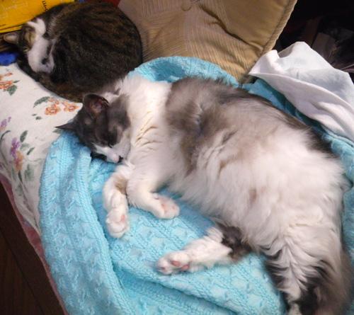 ヤマセの日のHuu&チョビ。 衣替えのお手伝い猫♪_a0136293_16213240.jpg