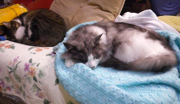 ヤマセの日のHuu&チョビ。 衣替えのお手伝い猫♪_a0136293_16223352.jpg