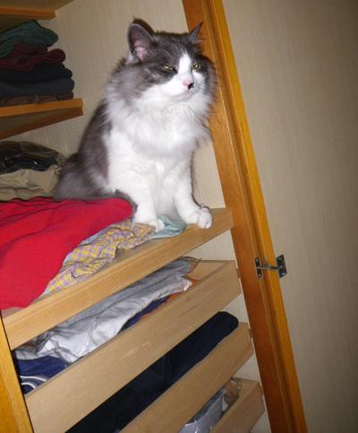 ヤマセの日のHuu&チョビ。 衣替えのお手伝い猫♪_a0136293_16331635.jpg