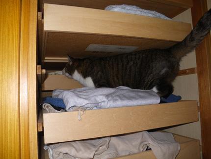 ヤマセの日のHuu&チョビ。 衣替えのお手伝い猫♪_a0136293_16371177.jpg