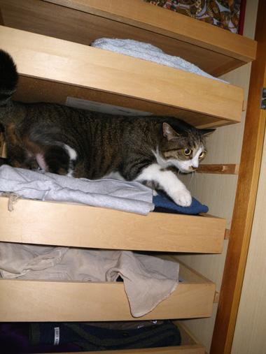 ヤマセの日のHuu&チョビ。 衣替えのお手伝い猫♪_a0136293_16432534.jpg