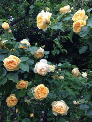 Rose Garden &  Afternoon Tea_c0195496_14431091.jpg