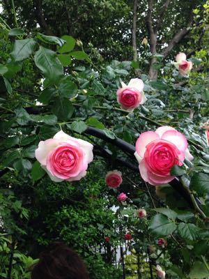 Rose Garden &  Afternoon Tea_c0195496_14431970.jpg