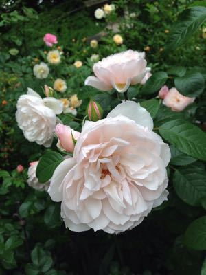 Rose Garden &  Afternoon Tea_c0195496_144363.jpg