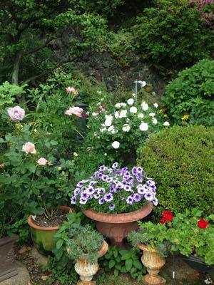 Rose Garden &  Afternoon Tea_c0195496_1443864.jpg